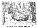 TM_SummerStarWildlifeSanctuary1-Small