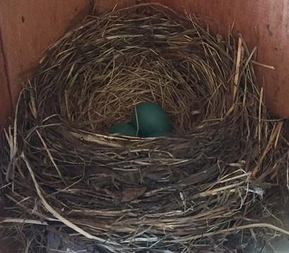 May 2016 Bird Nest